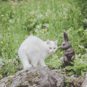 koulutus_kissa